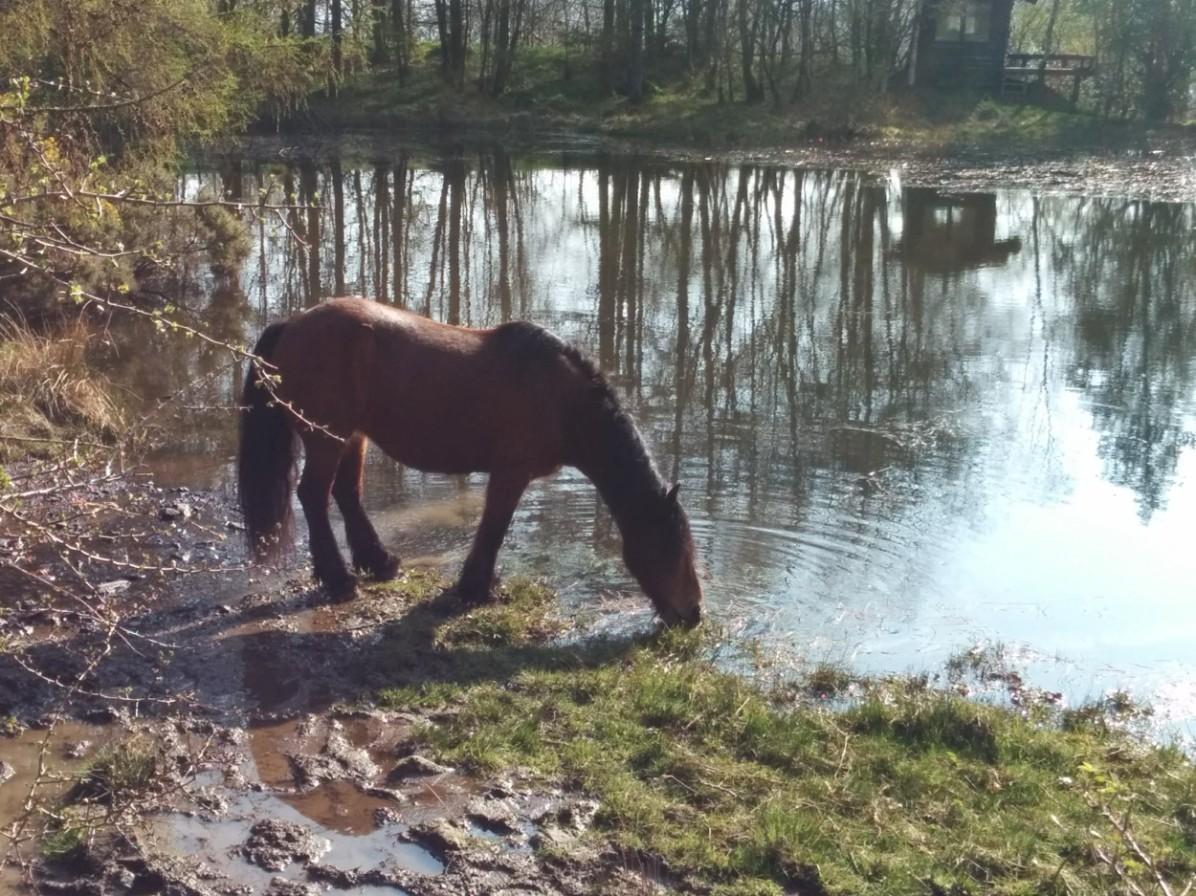 yew-horse